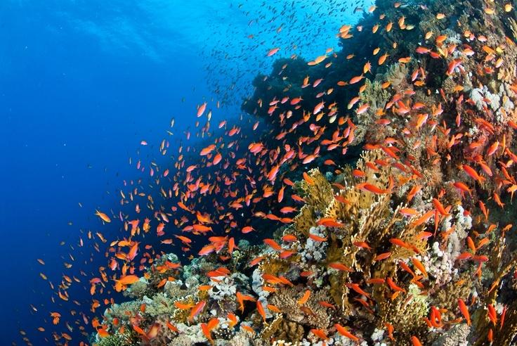 #Mozambique boasts an abundance of marine life.