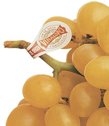 """""""LE RAISIN LE MIEUX PROTÉGÉ DU MONDE""""      Le seul raisin au monde mis en sachet avec Appellation d'Origine."""