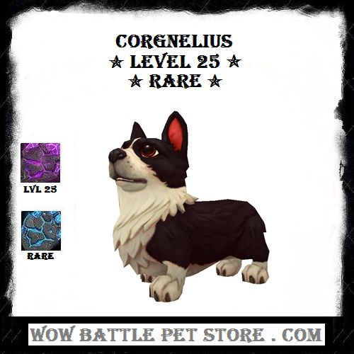 Corgnelius WoW Battle Pet For Sale   WoW Pets for sale   Shop WoW Battle Pets   Buy WoW Pets   Level 25 wow pets   Corgnelius Battle Pet WoW   Shop World of Warcraft Pets   WoW Pet Store   WoWbAttlePetSTore    where to buy wow pets  