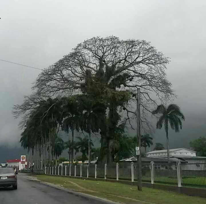 Kwattaweg, nabij de hoek van Idsingastraat. Foto van Misi Dees op FB