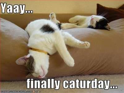 Bildresultat för caturday