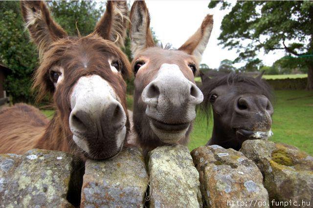Donkeys!!!