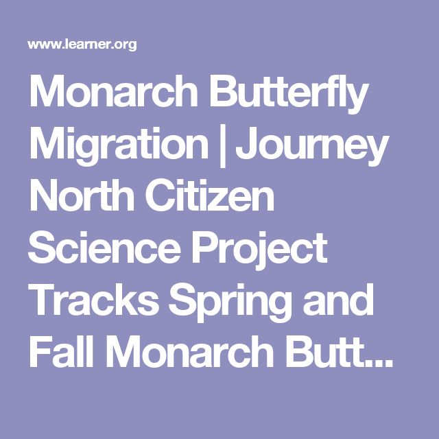 Monarch Butterfly Migration | Journey North Citizen Science Project Tracks Spring and Fall Monarch Butterfly Migration