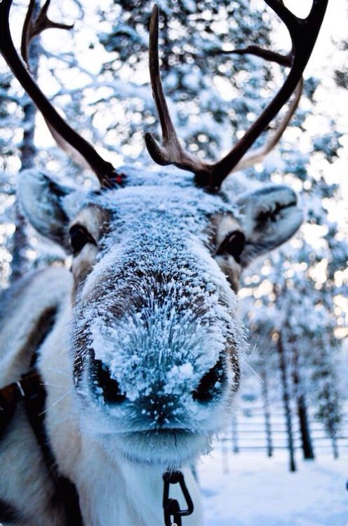 Frankly, I think Rudolph's cocaine problem might be getting worse.
