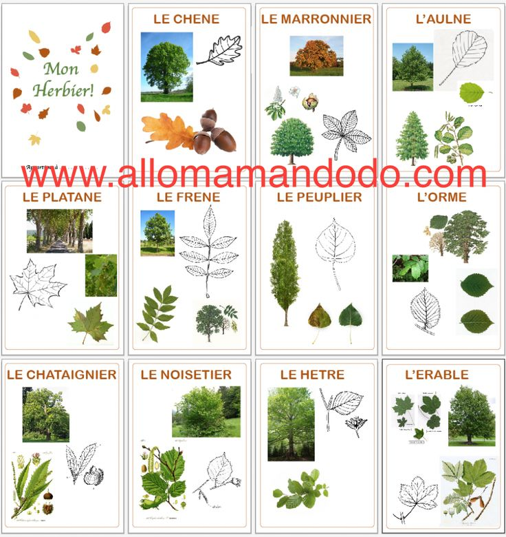 reconnaitre feuilles d'arbres