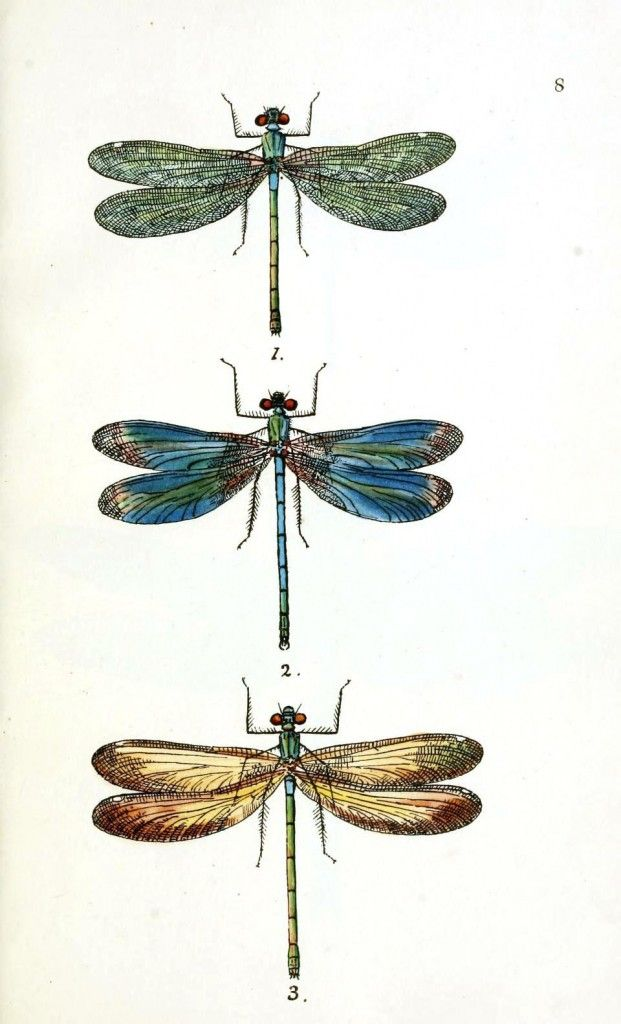 Dragonflies Art Print Vintage Dragonfly Illustration Wall Wiring Diagram