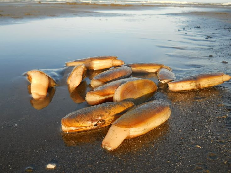 Riesling and Razor Clams