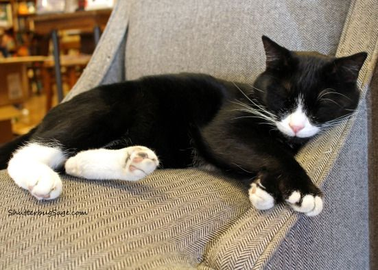 Oliver the cat at the Dusty Bookshelf in Manhattan, Kansas