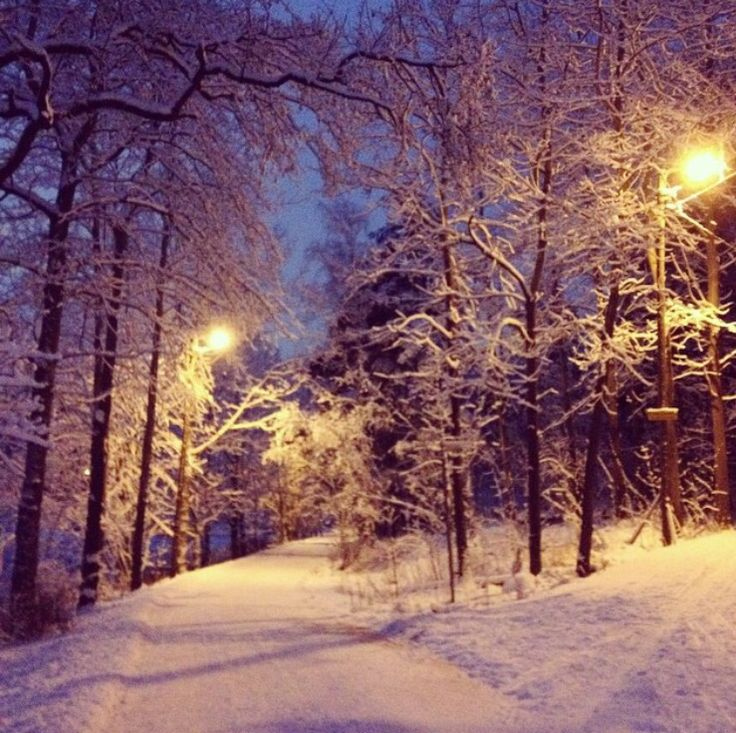 Winter, snow, Keskuspuisto, Helsinki, Finland