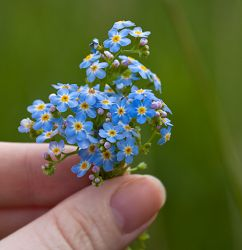 Tiny bouquet of Forget-me-not by Lost Forest Jewellery