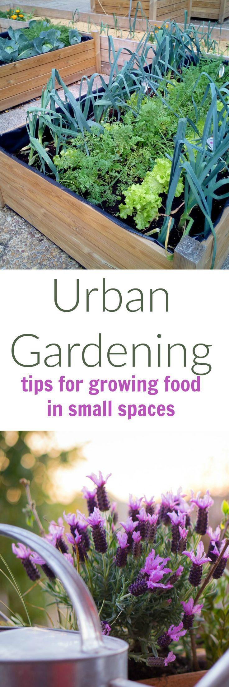 Best 25 Urban Gardening Ideas On Pinterest Growing