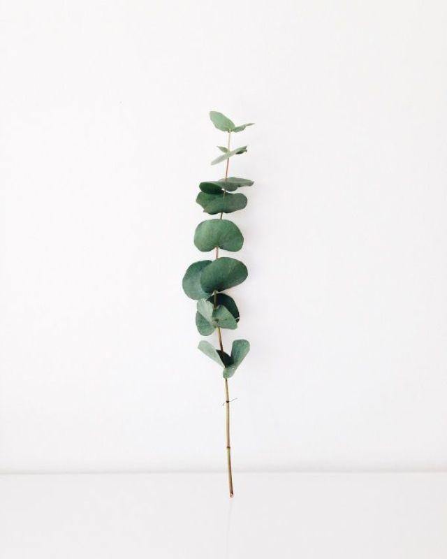 """""""Moodboard Plants"""" by www.leuchtend-grau.de #Plants #leuchtendgrau #Green"""