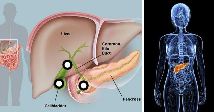 In che modo proteggi il pancreas? Credi che la dieta che stai seguendo è adatta a proteggere questo importantissimo organo?