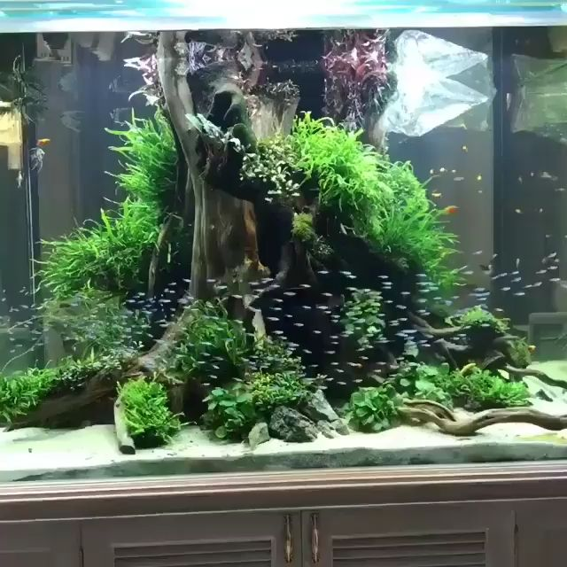 Aquascape inspiration Video in 2020 | Freshwater ...