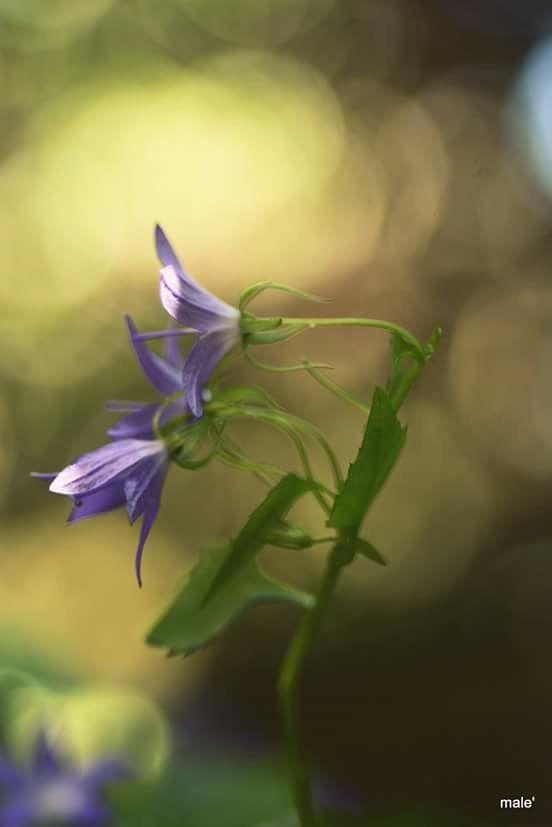 I fiori di male`