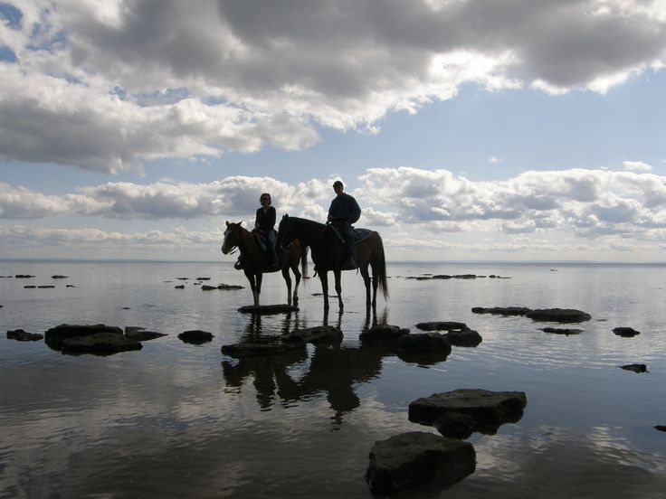 Horseback ride along the beach and quiet trails in Niagara, Ontario near Toronto. Horse ride on beautiful trails. A Real Niagara attraction.