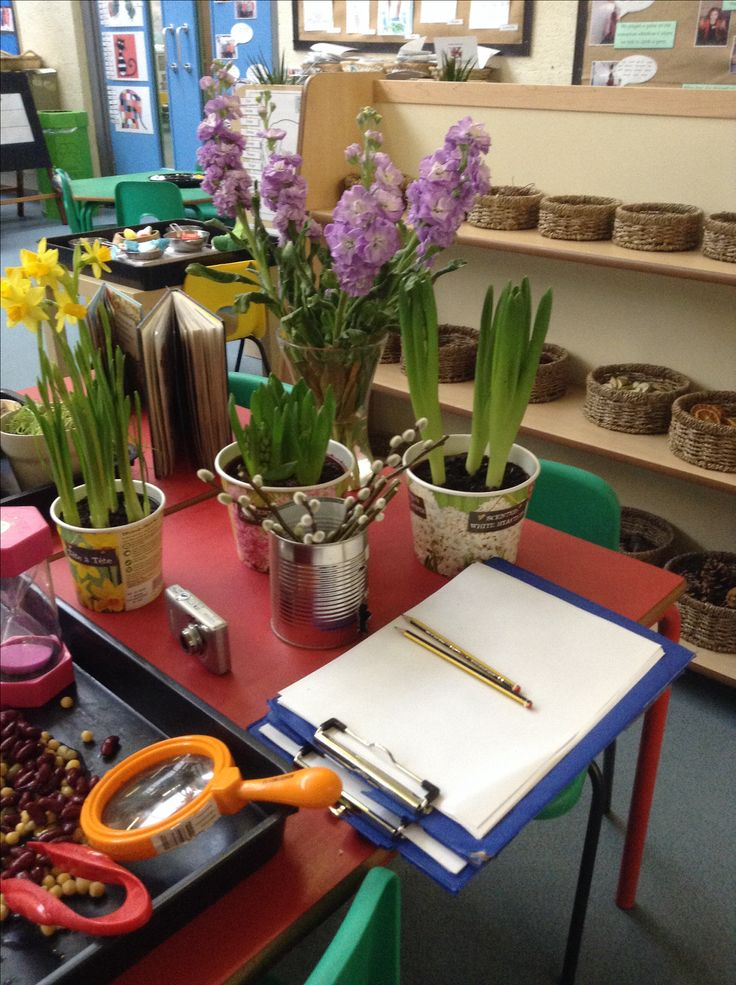 Live plants and flowers for the children to explore, smell, take pictures of, draw  write about.