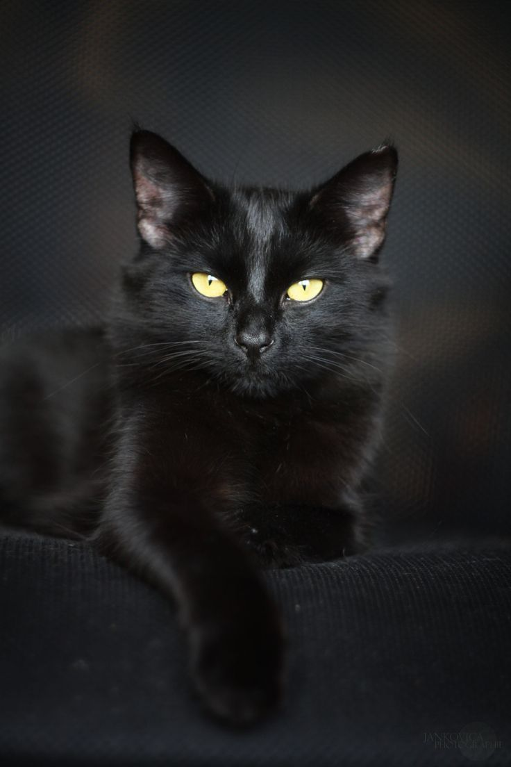 Beautiful black cat. And don't forget the gorgeous eyes!
