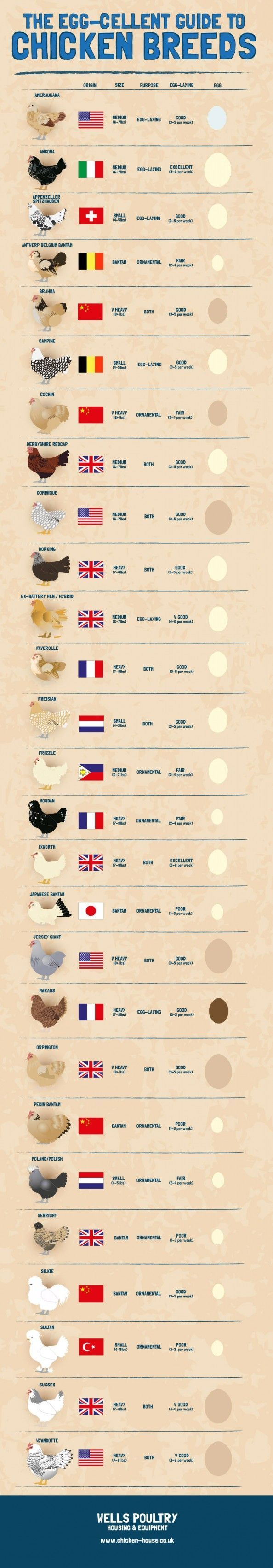 The Egg-Cellent Guide to Chicken Breeds Infographic - ruggedthug