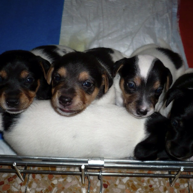 Maggio 2008: I primi 5 cuccioli di Emma Peel e Lenticchia: Eva Kant, Diabolik, Ellery Queen, John Steed e Montalbano