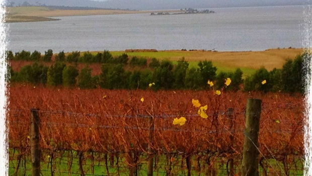 Our Coombend vineyard on Tasmania's east coast.