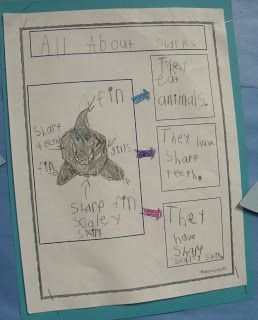 First grade animal research template.