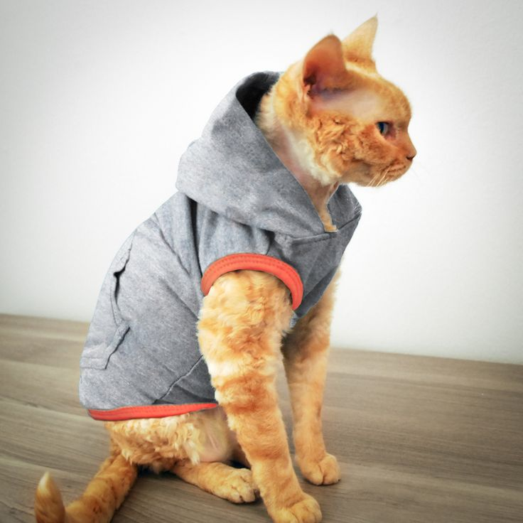 Cat peeing on clothing