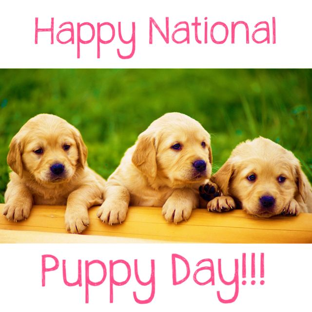 Today Is Everybody Loves Cute Puppies.