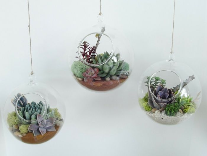17 best images about jardinage on pinterest coins planters and haus - Terrarium plantes grasses ...