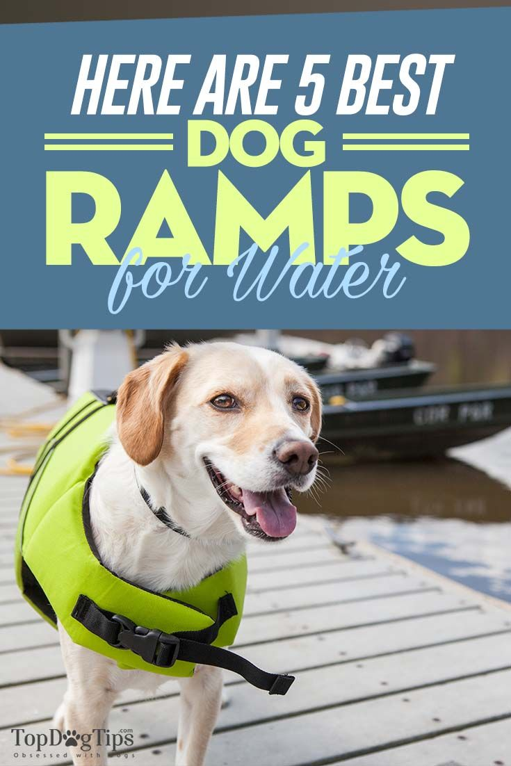 5 best water ramps for dogs top dog tips dog boat ramp dog ramp rh pinterest com
