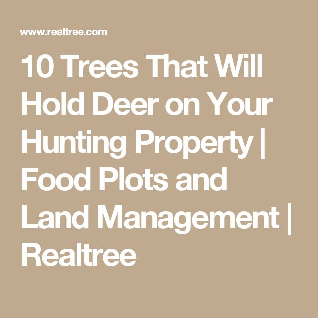 10 Trees That Will Hold Deer on Your Hunting Property | Food Plots and Land Management | Realtree