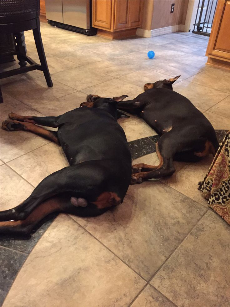 It's been a hard day, playing! Duke and Roxy.
