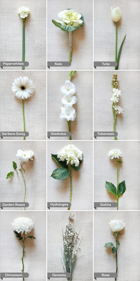 DIY > White Wedding Flowers #792828 - Weddbook