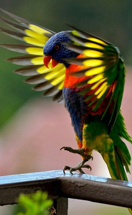 369 best images about Reserve me some feathers - I have ...