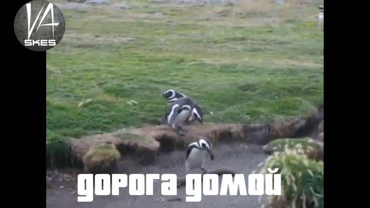 ПОБЕГ ПИНГВИНОВ из ЗООПАРКА!