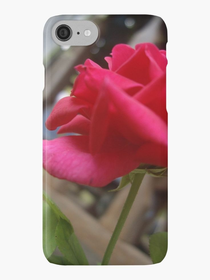 Pink Rose by stylebygat