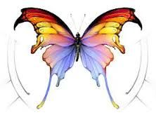 Image result for butterfly sketches