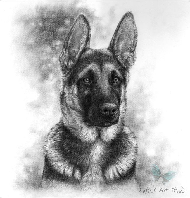 390 best GSD drawings & paint images on Pinterest | German ...