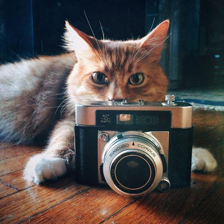 Cat S Camera