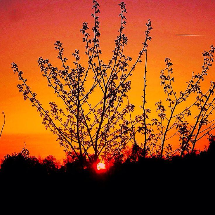 #mjdoddy Instagram Welcome Sun #photoexpress #wonderland #whatawonderfulworld #whenthesunsgoesup #sunset #sunshine #seethebeauty #relax #thessaloniki #iphoneonly #instagreece #imagine #orange #aviary #deluxefx #feelings #feelthevibe #Greece #keepthespiritalive #colors #chill #nature #magic #mjdoddy #welcomemay #may #Hellas