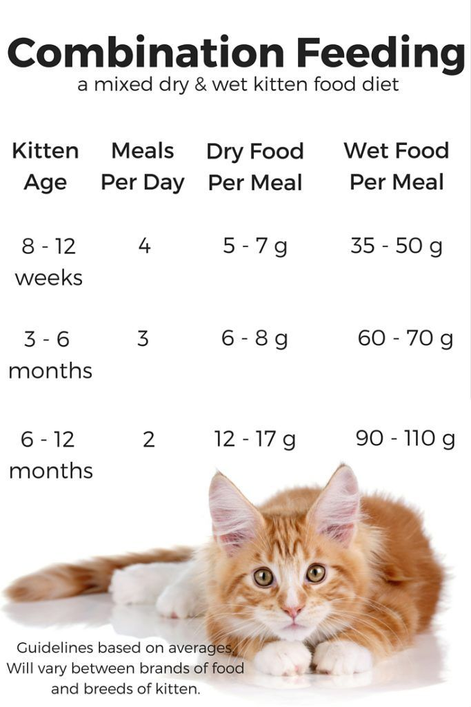 Feeding Your Kitten Helpful Kitten Feeding Schedules And Charts Kitten Food Feeding Kittens Kitten Care