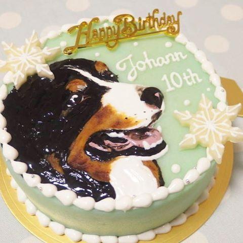 バニさんのドアップ🎵 いつもシンプルな似顔絵ケーキです😉 今回は雪をテーマにしてみました❄️✨ #bernesemountaindog#bernese#berneselove#bernesedog#cake#dogcake#dogsweets#decorationcake#birthdaycake#decorative#ordermade#バースデーケーキ#誕生日ケーキ#オーダーメイドケーキ#犬用ケーキ#デコレーションケーキ#犬#わんこ#愛犬#似顔絵ケーキ#バーニーズマウンテンドッグ#バーニーズマウンテン#バーニーズ
