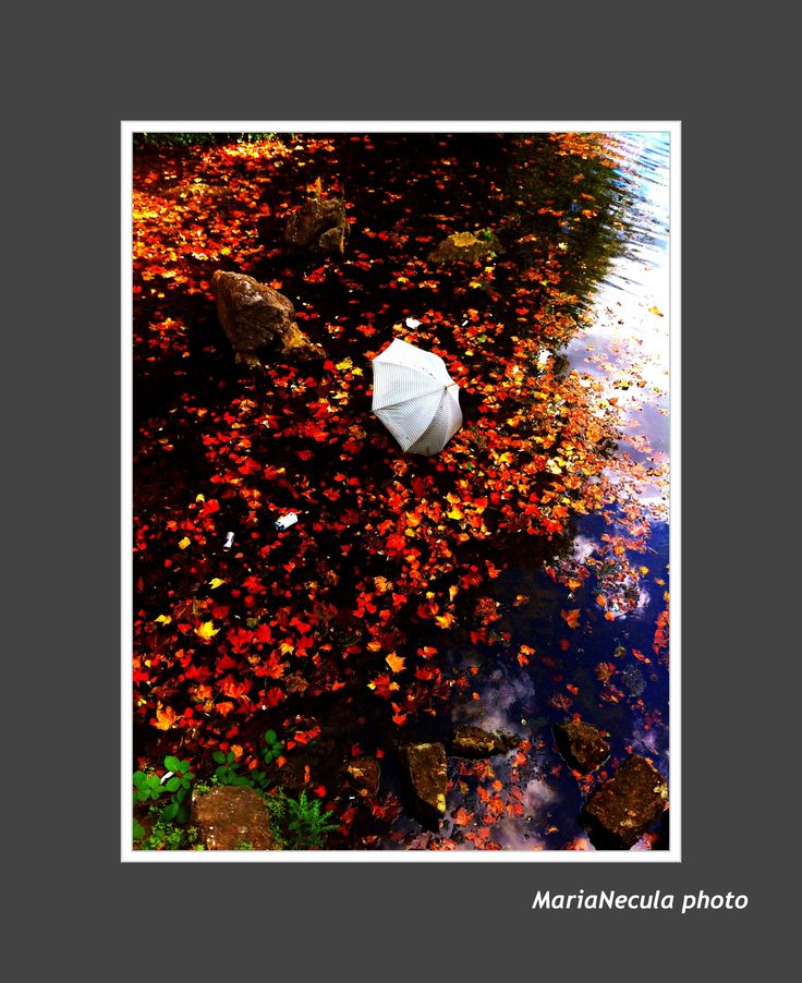 Umbrella wandering on the river ... Cologne // Koln