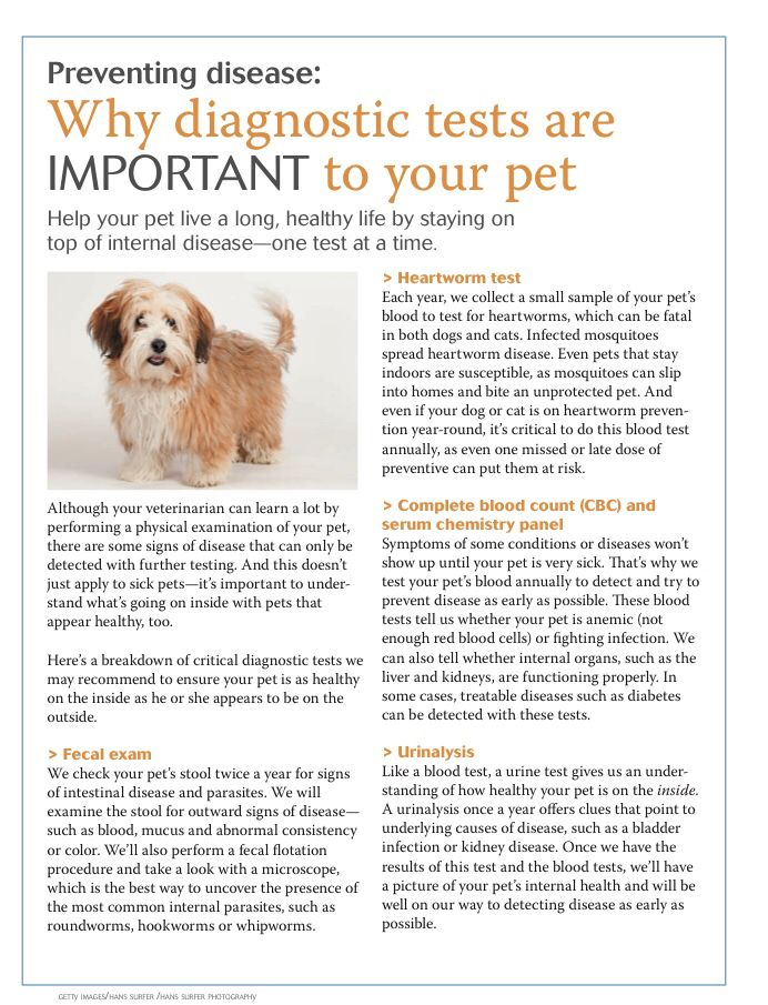 Why Diagnostic Tests Are Important In Your Pets Dvm360 Animal Hospital Veterinary Clinic Pet Vet