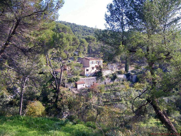 La forêt du Garlaban prés du village de La Treille