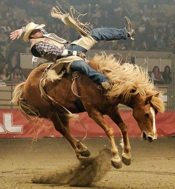 Rodeo /  an exhibition or contest in which cowboys show their skill at riding broncos, roping calves, wrestling steers, etc.