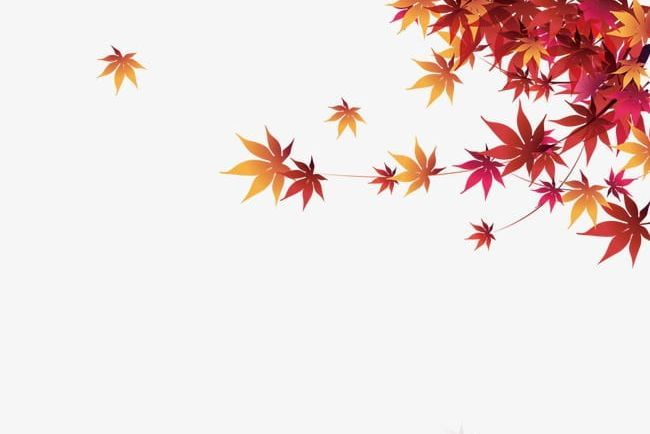 Autumn Maple Leaf Png Autumn Autumn Clipart Autumn Clipart Leaf Leaf Clipart Leaf Clipart Maple Leaf Background For Photography