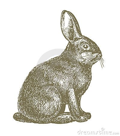 Rabbit Drawing - Download From Over 28 Million High Quality Stock Photos, Images, Vectors. Sign up for FREE today. Image: 17088843