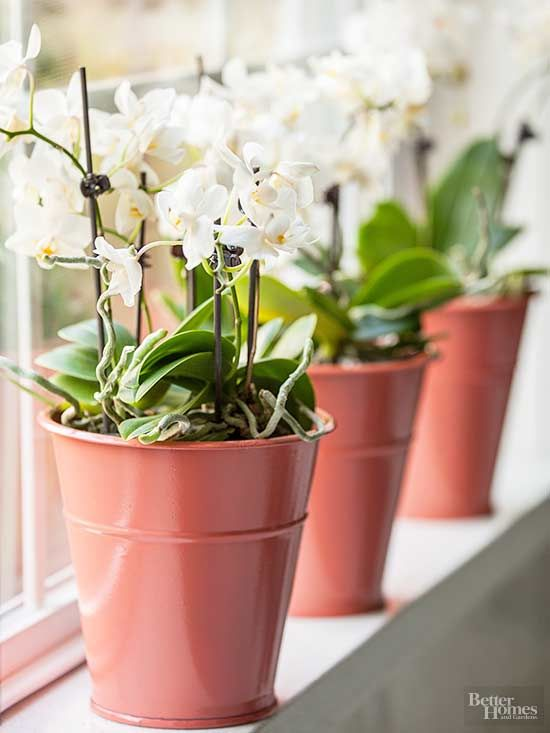 When watering orchids, the goal is to saturate the bark pieces, not the roots themselves.