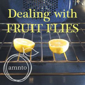 Take a lemon and cut into two halves. Place them in your oven directly on the rack and leave the oven door open for a few hours (you ca...